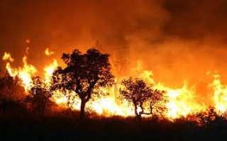 حريق نشب فى أشجار طريق المطار بالغردقة