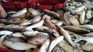 تفاصيل أسعار الأسماك اليوم ..انخفاض سعر البلطى