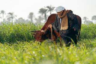 مبادرة ألبان بلدنا تشغل أكثر من 8 آلاف مزارع بمحافظات بني سويف والفيوم والبحيرة