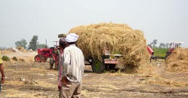 نائب يطالب وزارة الزراعة بتوعية المزارعين باستخدامات قش الأرز
