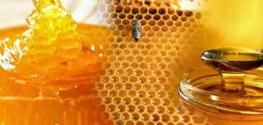 أكتوبر .. انطلاق أول مهرجان لعسل النحل المصرى